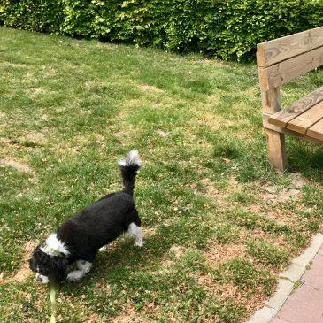 Honden en zuigen